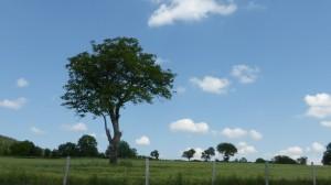tree 26
