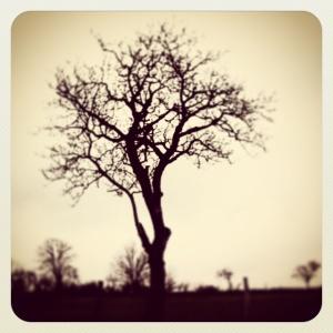 tree 28