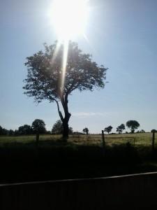 tree 31